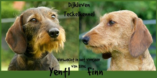 yentl-finn-verwacht